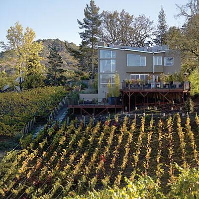 vineyard-day-l (1)