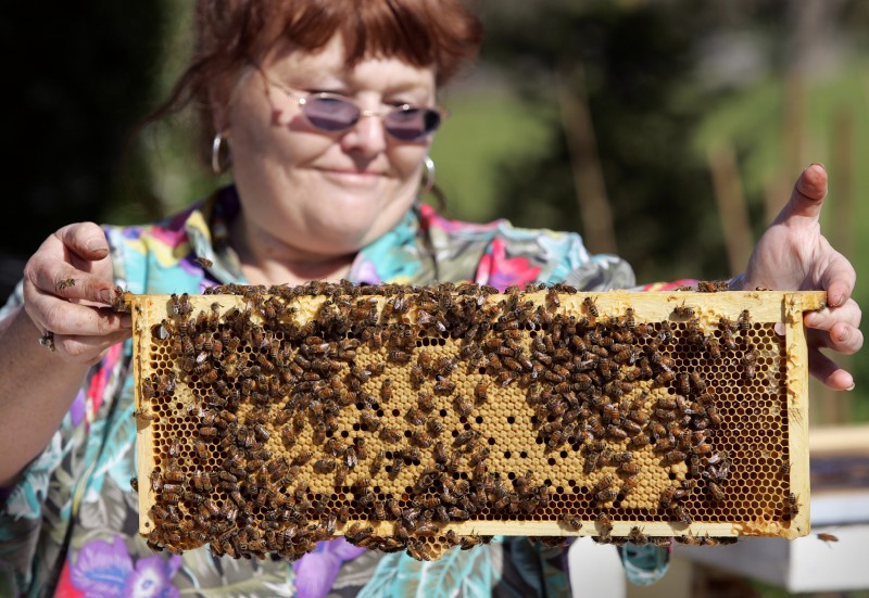 athy Cox examines one of her beehives at Bloomfield Bees & Bouquets.Photo by Christopher Chung