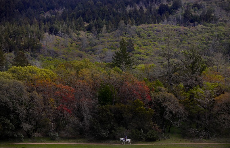 Rosanna Morse and her Arabian, Mystic, of Sebastopol, plod along the Lake Trail near Lake Ilsanjo, Tuesday April 5, 2011 at Annadel State Park in Santa Rosa. (Kent Porter / Press Democrat) 2011