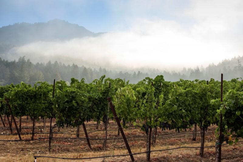 Photo courtesy of St. Francis Winery & Vineyard