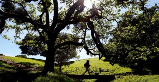 Peri Olsson of Santa Rosa takes her dog Teddy on a walk at Taylor Mountain Regional Park and Open Space Preserve in Santa Rosa, California on Wednesday, March 23, 2016. (Alvin Jornada / The Press Democrat)  Santa Rosa ranked one of the best places to live