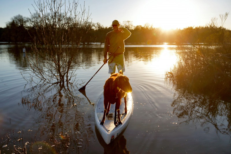 Bella the goat takes a ride on her owner John Hadley's standup paddleboard taking advantage of the Laguna de Santa Rosa's elevated water levels from recent rainfall, in Santa Rosa, California on Saturday, February 11, 2017. (Alvin Jornada
