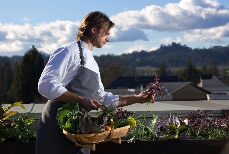 Chef de cuisine Aaron Koseba harvests purple frill mustard greens form th restaurants rooftop garden.