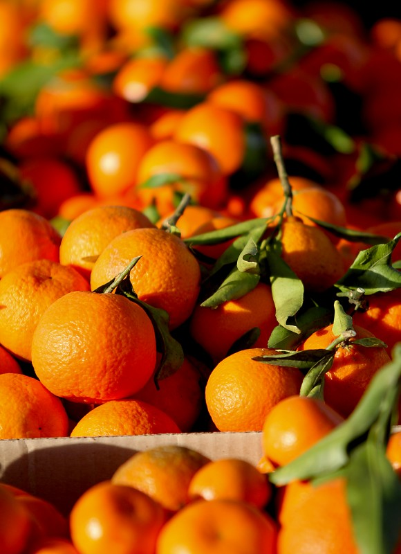 Mandarin oranges at the Santa Rosa Farmers Market, Saturday Feb. 4, 2012 in the parking lot of the Santa Rosa Veterans Memorial Hall. (Kent Porter