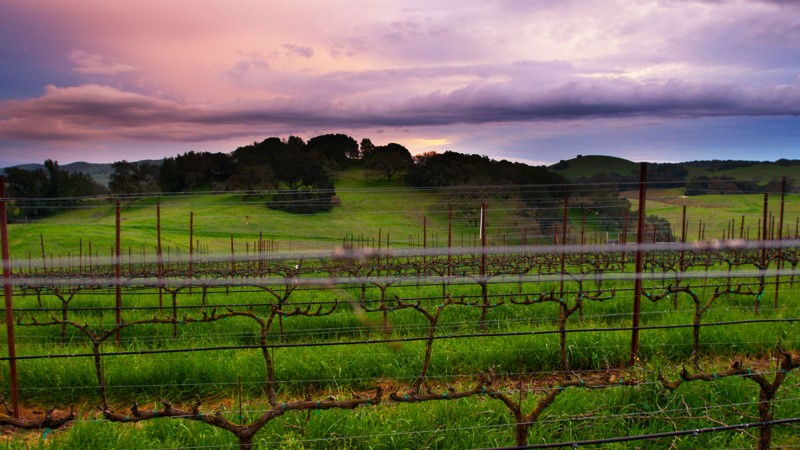 Signature Sonoma Valley features a tour and tasting at Durell Vineyards, a premier grower of Pinot Noir (Photo courtesy of Durell Vineyards)