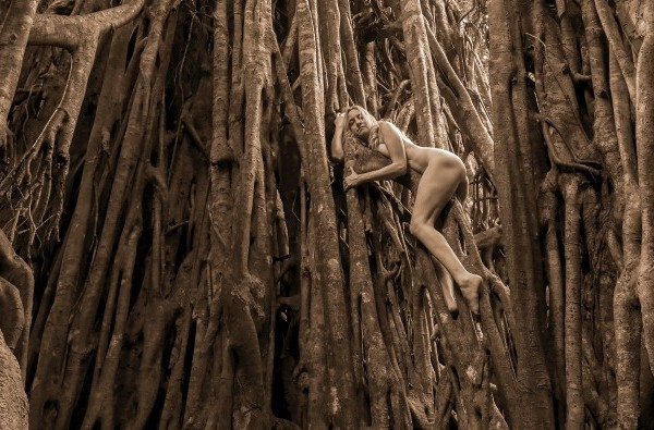 Julianne Skai Arbor in a Cathedral Fig Dryad-Green Fig-Ficus VIrens, in Australia. (Photo courtesy of TreeGirl)