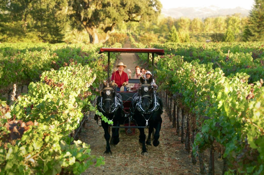 6 Unique Napa & Sonoma Wine Tours