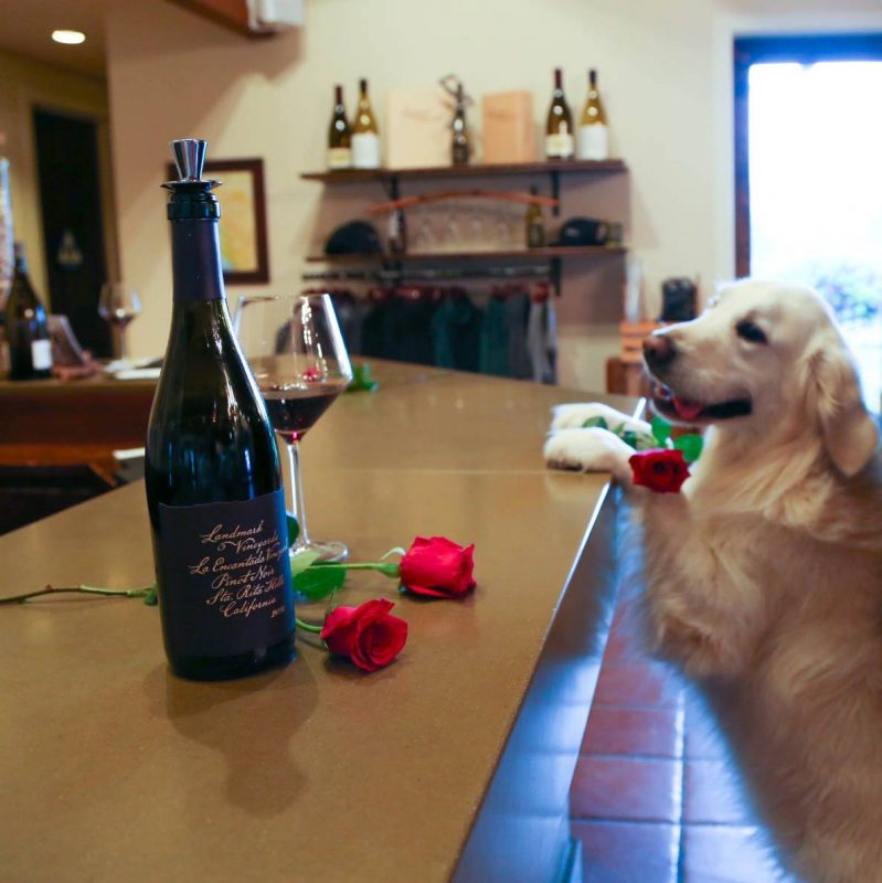 17 Best Ideas About Danish Chair On Pinterest: 17 Best Dog-Friendly Wineries In Sonoma