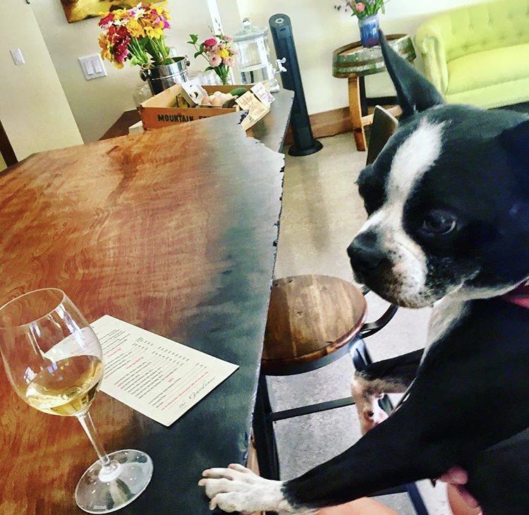Dog Friendly Hotels Windsor