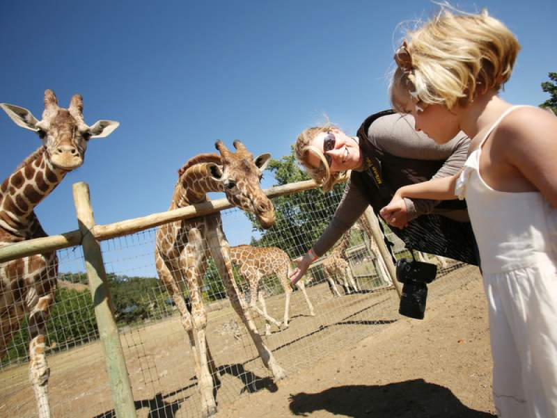 Safari West Resumes Wildlife Tours After Santa Rosa Fire