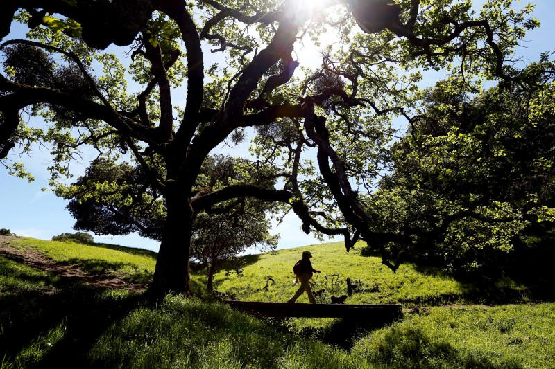 15 Favorite Hikes in Sonoma County