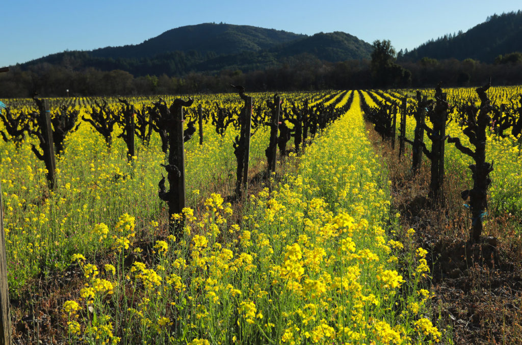 Pair Wine With Wildflowers Along These Sonoma County Routes