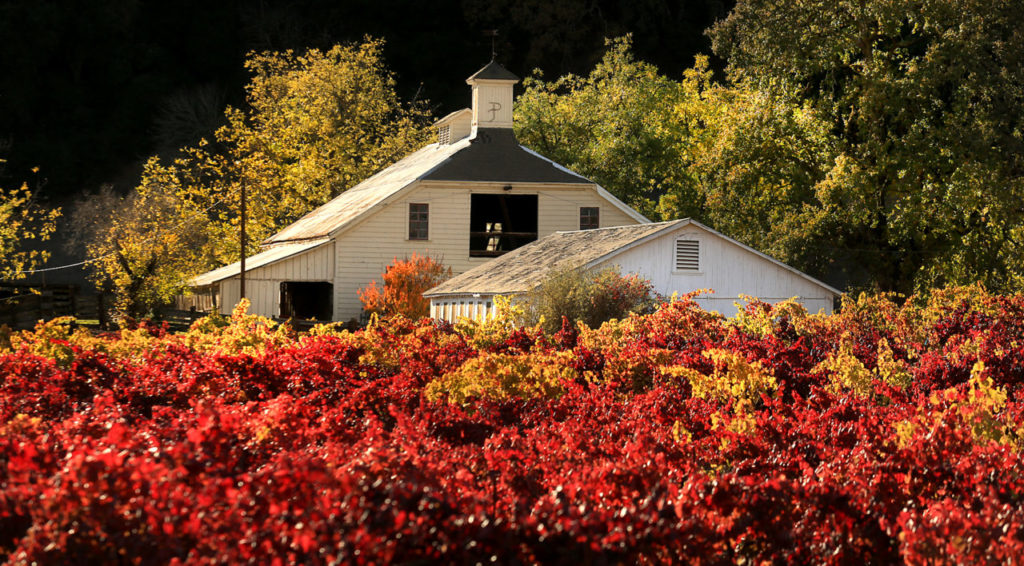 Beauty and The Leaf: 10 Favorite Sonoma and Napa Spots for Fans of Fall