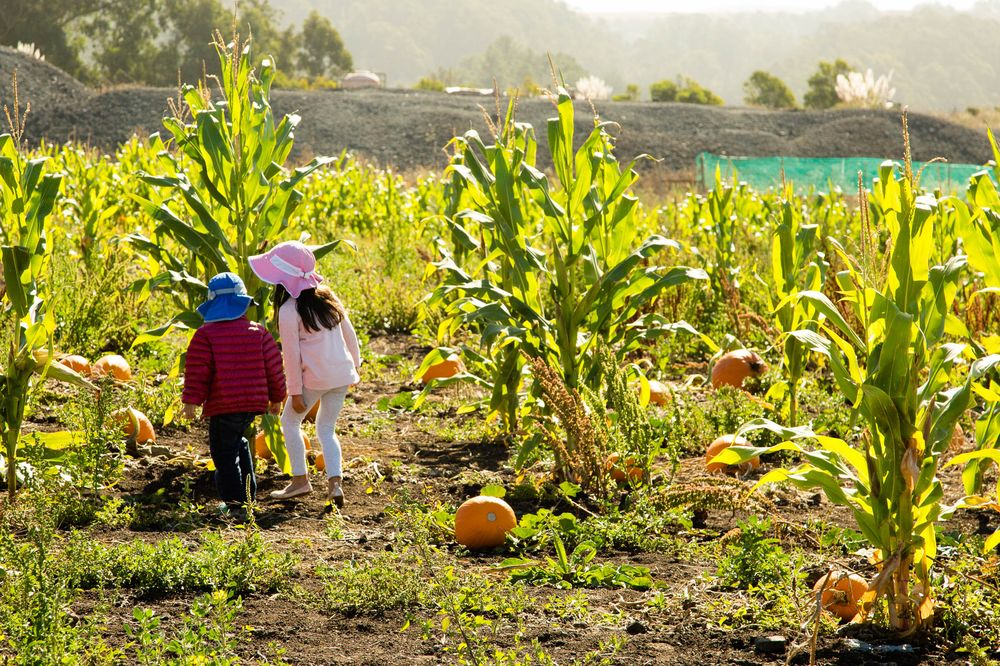 Fall Day Trip: Visit America's Best Pumpkin Patch