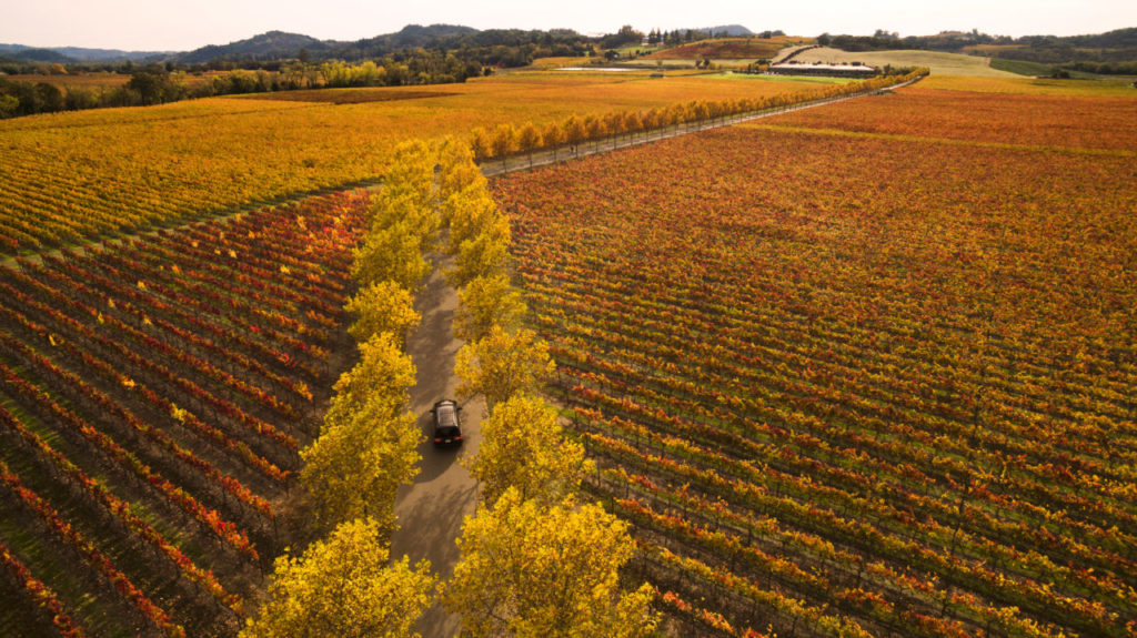 Holiday Guests Coming? Four Perfect Sonoma County Day Trips