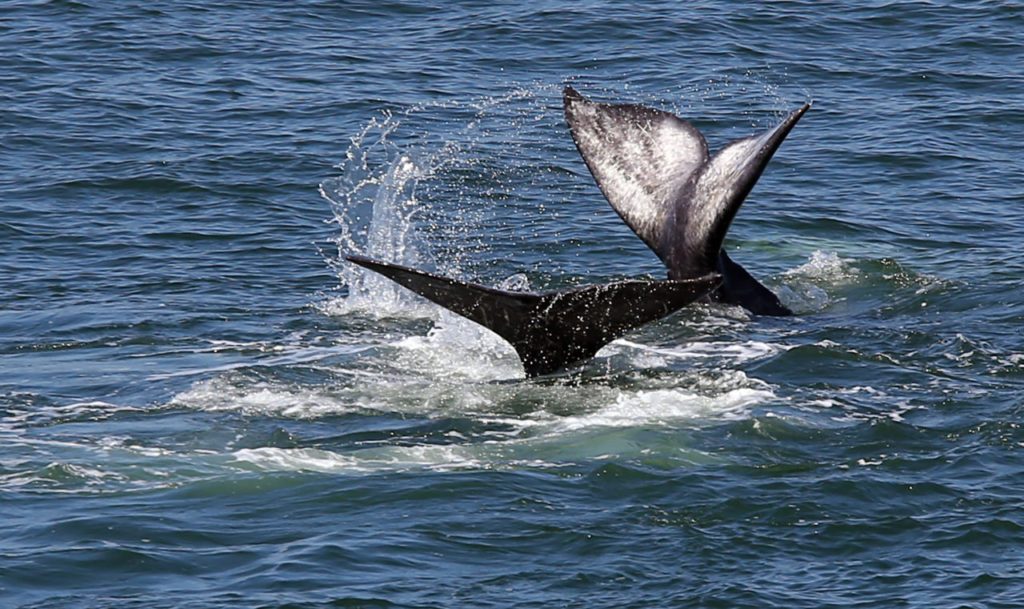 Where to Go Whale Watching on the Sonoma Coast
