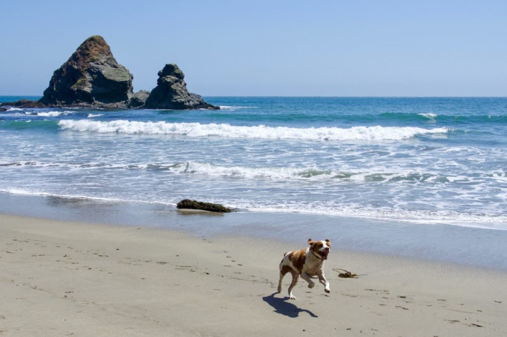 12 Spots Where You Can Camp on the Beach in Sonoma, Mendocino and Marin