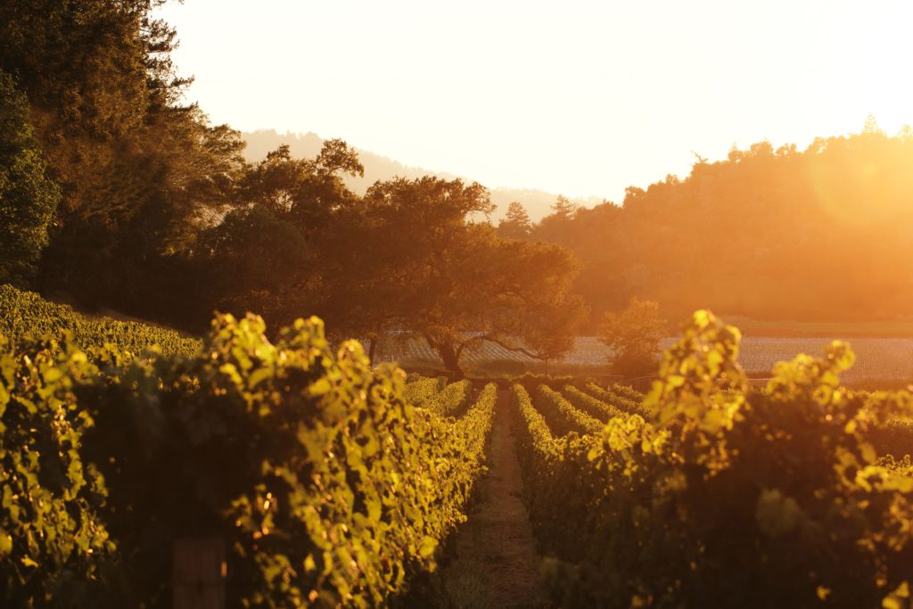 10 Wine Country Instagram Accounts You Need to Follow