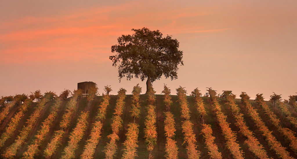 Sonoma County Fall Vineyards in 40 Photos