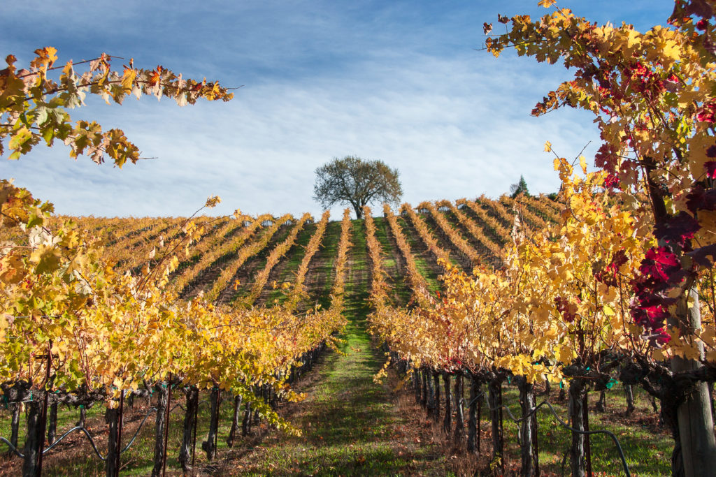 Beauty and The Leaf: 15 Favorite Sonoma and Napa Spots for Fans of Fall
