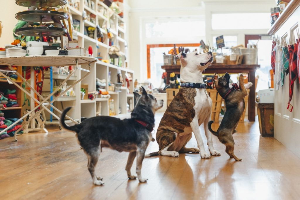 4 Excellent Pet Boutiques in Sonoma County