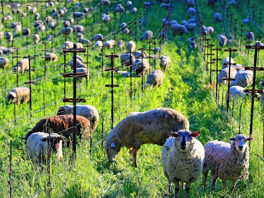 Sonoma County and Beyond: See Wildlife and Nature Through Live Streams and Videos