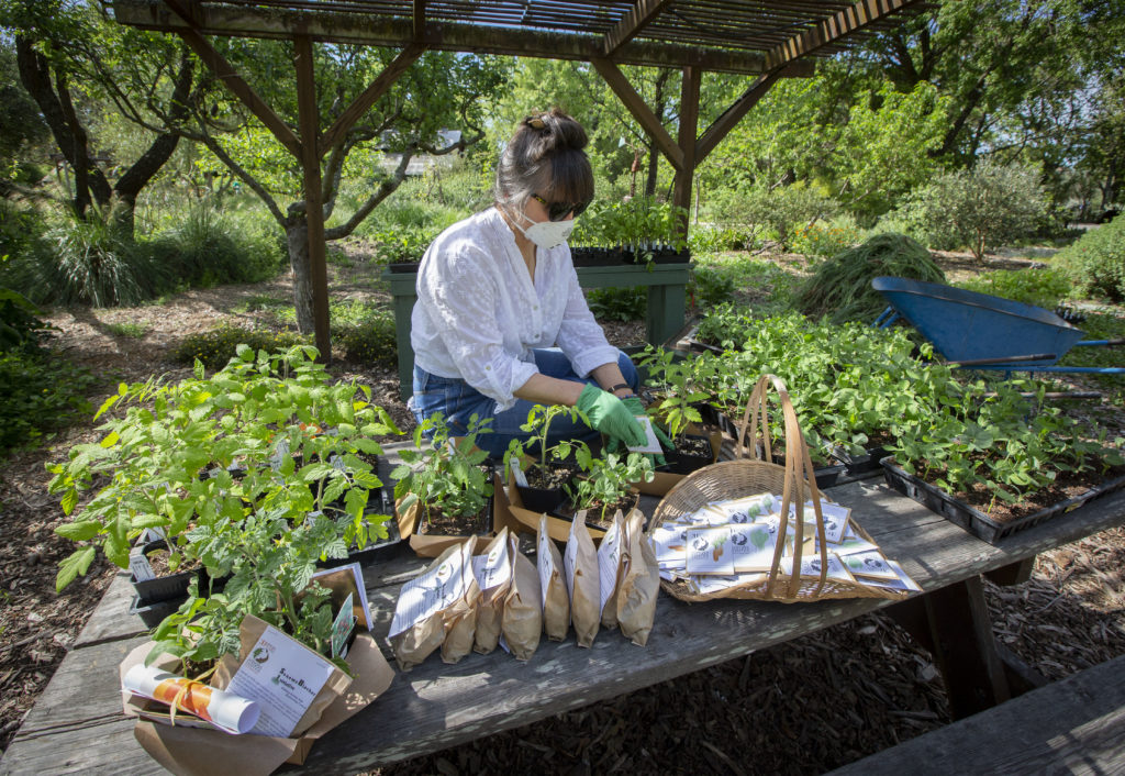 'It's Bringing You Back to What's Important:' Locals Share Experience of Planting Victory Gardens