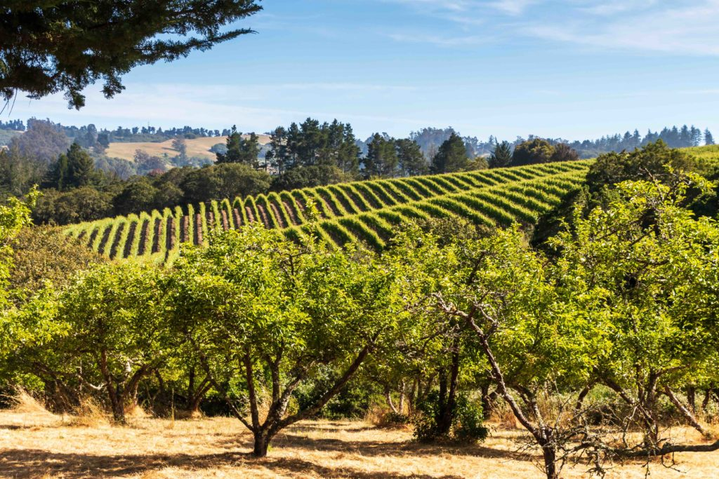 Sonoma County Town Makes NY Times' List of 'Places to Love in 2021'