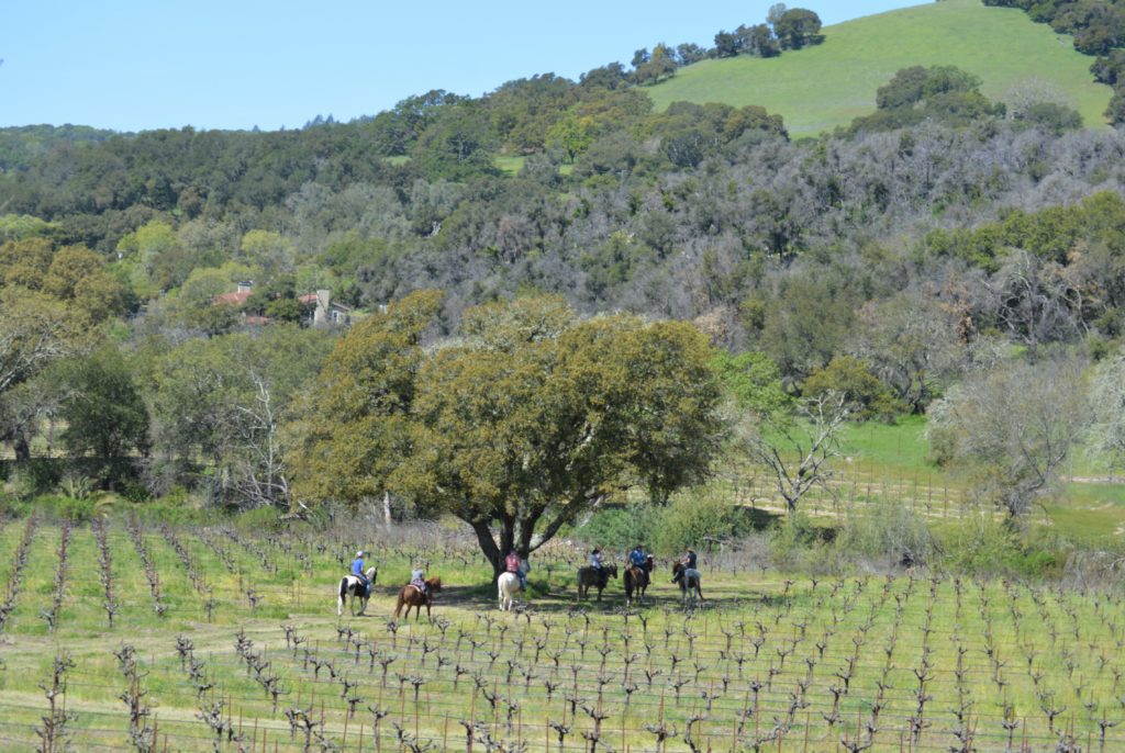 Drink Wine, Ride Horses and Fly in a Plane with These Sonoma Vineyard Experiences